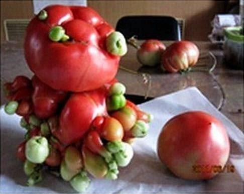 Veggies from Fukushima